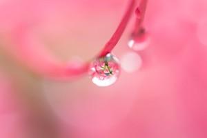 水滴ピンク