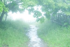 霧の先には・・・