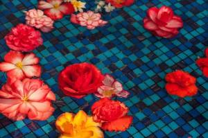 水に浮かぶ花(ベゴニア)