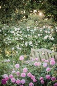 バラに囲まれるベンチ