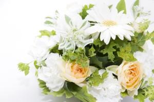 白い花の贈り物